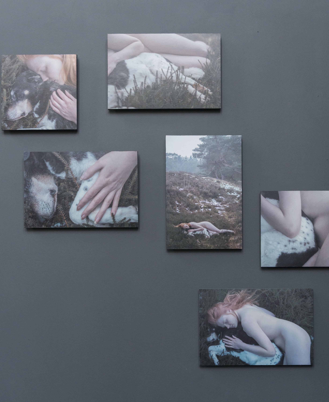 Zes foto's aan de muur van een vrouw die met een hond ligt op de hei